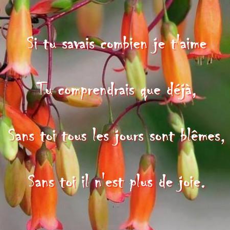Court Poème Pour Dire Je Taime Messages Et Textes Damour