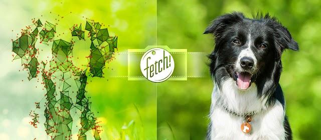 Fetch! la app de Microsoft que reconoce razas de perros