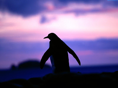 Penguins Standard Resolution HD Wallpaper 4