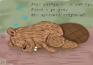 бобер спит