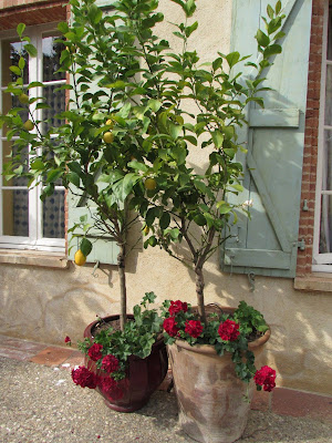 France: Lemon Tree and Geraniums l LadyD Books