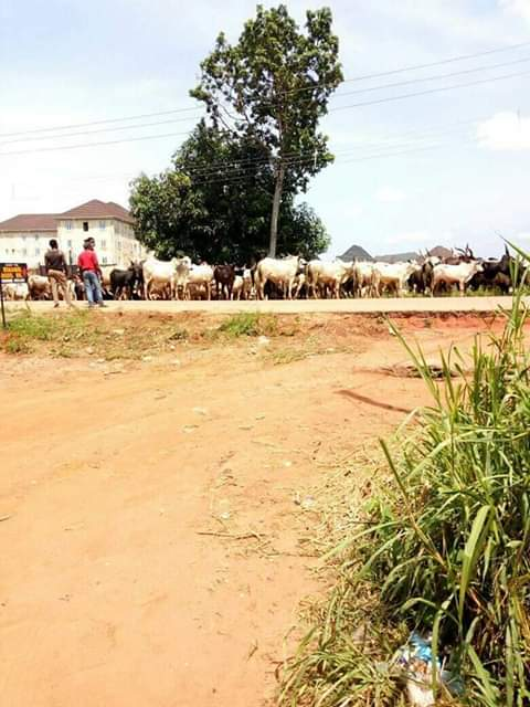 Photos: Fulani herdsmen allegedly slaughter two Hausa boys who stopped their cattle from grazing on a land they were guarding in Owerri