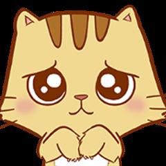 Brown Cat : Cutest
