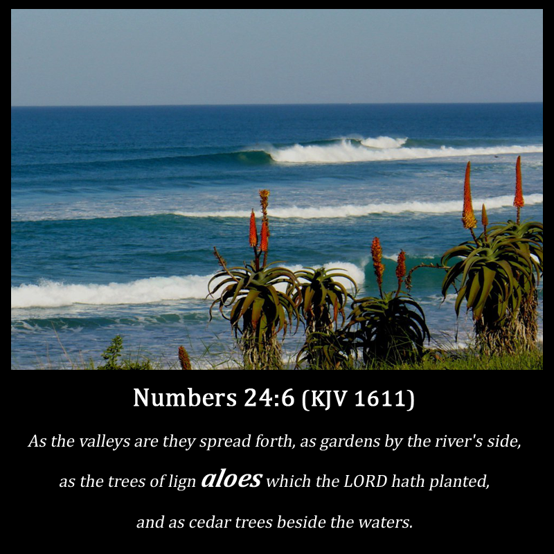 Daily Bible Verse: Bible Verse about Aloes (KJV 1611)