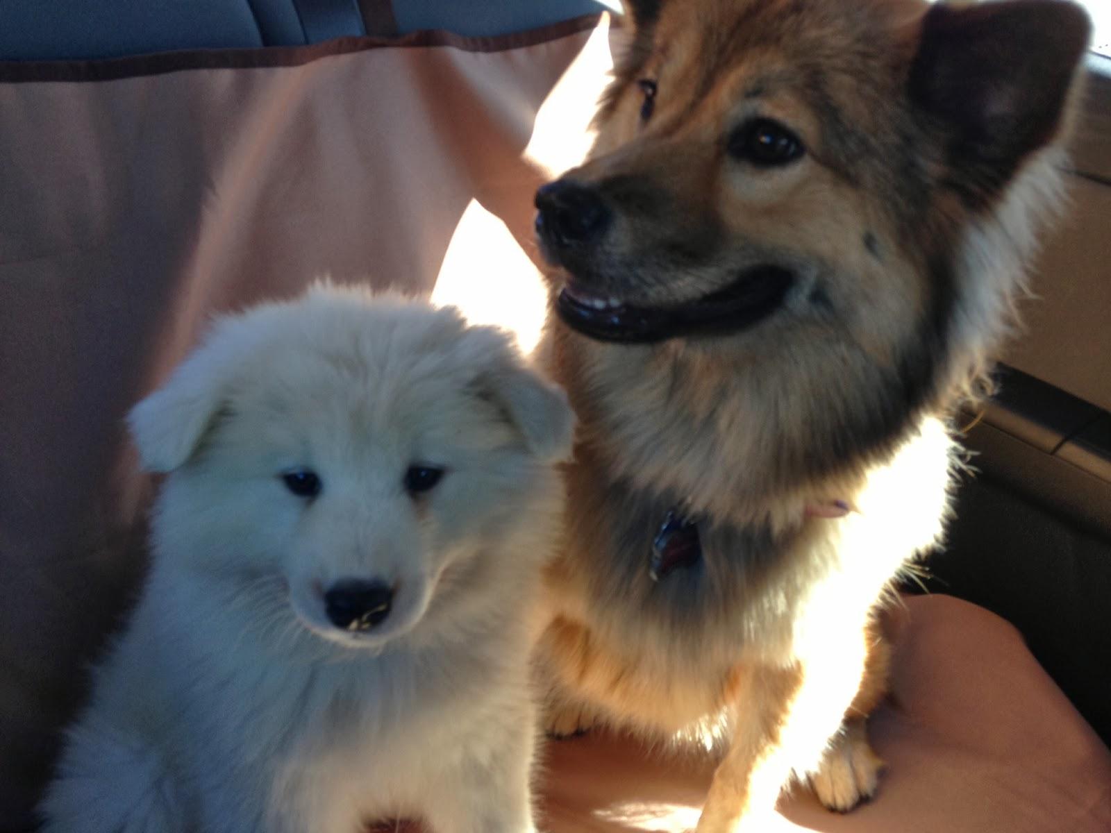 Https Www Cesarsway Com Dog Care Nutrition Dog Approved People Food