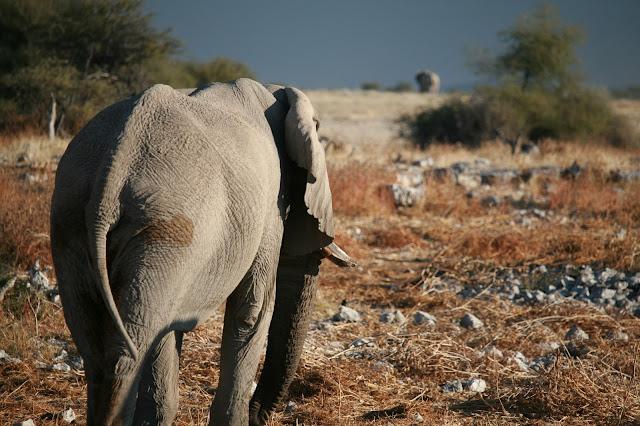 etosha-nationalpark-namibia-elefant