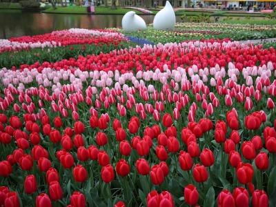 Keukenhof Garden, Lisse, Belanda
