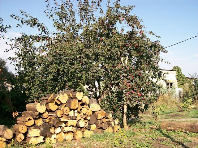 дерево - ранетка