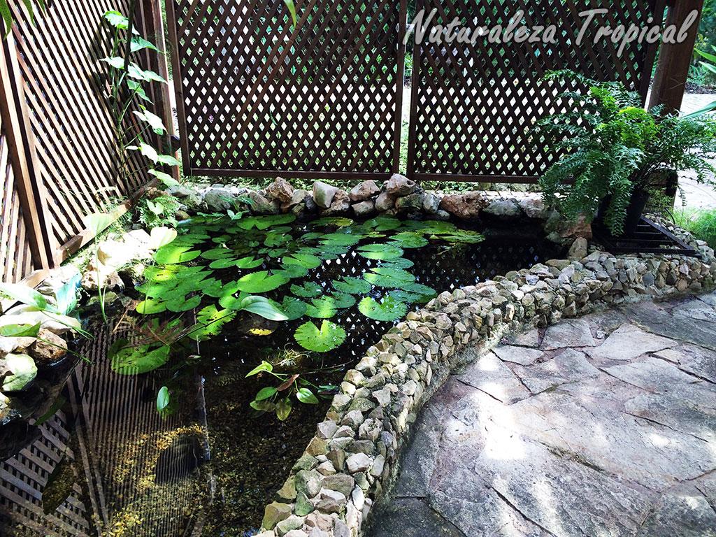 Naturaleza tropical aspectos a tener en cuenta si quieres for Estanque para tortugas en terraza