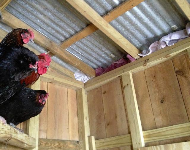 drafts, chicken coop