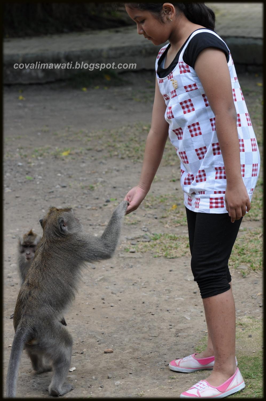 Runaway Diary Berkawan Dengan Monyet