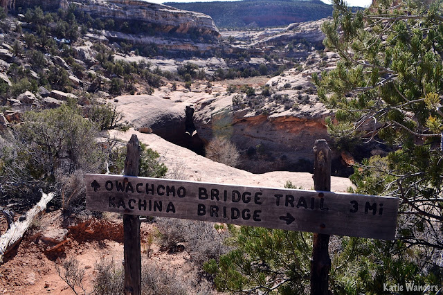 Views from natural bridges national monument