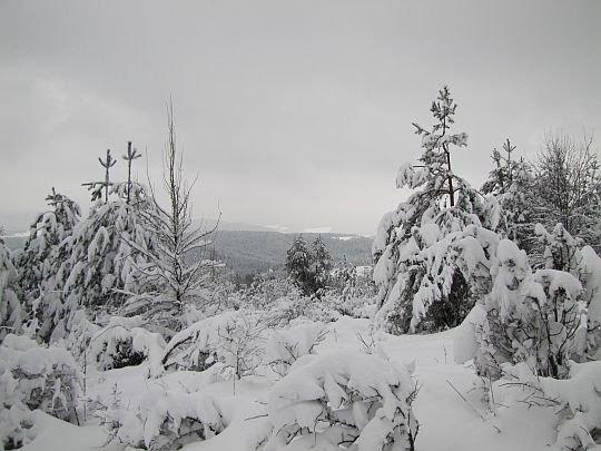 Zima na Polańskiej.