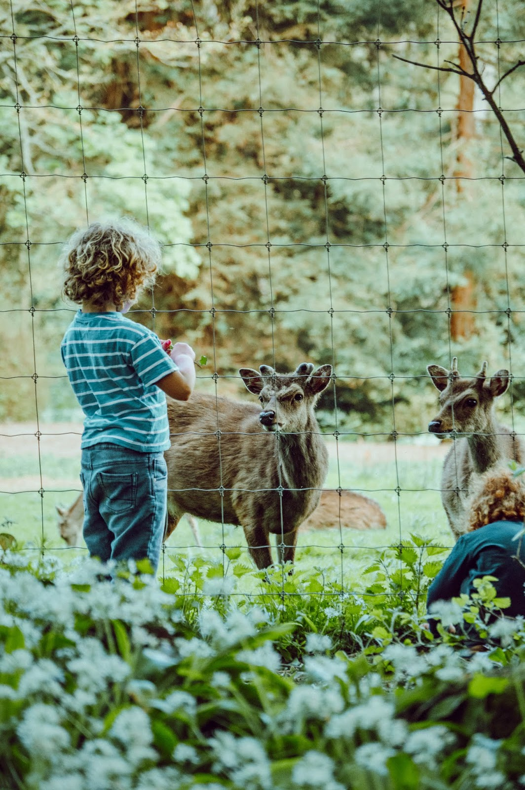 Camping Inspiration & Activities For Families ♥ | Dolly Dowsie