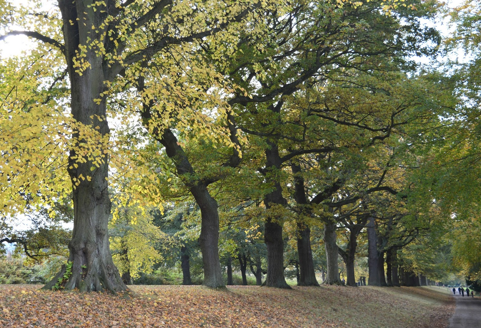 Healthy Eating and Fitness in the North East- Gibside