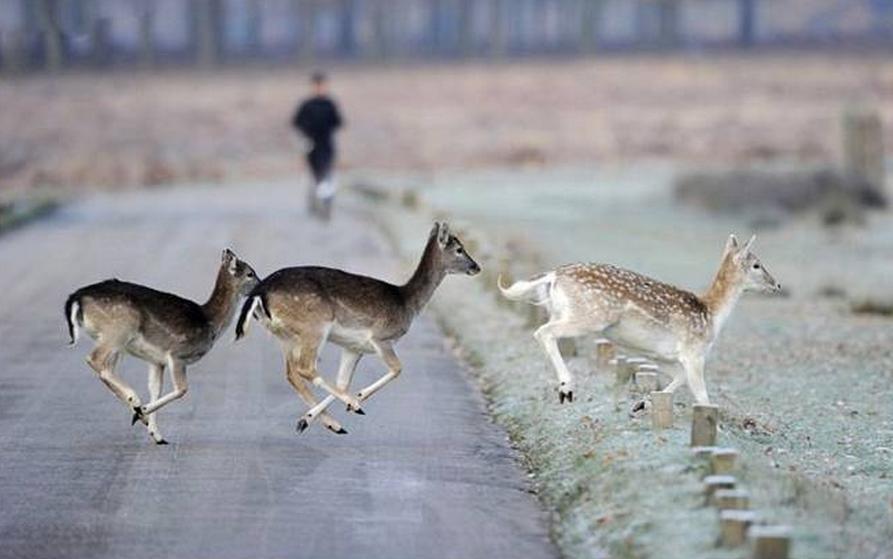 Beautiful Animals Safaris Safari Amazing Beautiful: Beautiful African Animals Safaris: Amazing Funny Animal
