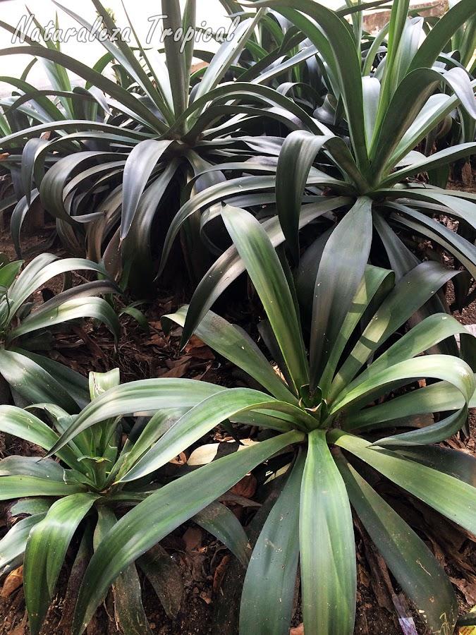 Los agaves son ideales para crear jardines de este tipo porque no necesitan cuidados específicos