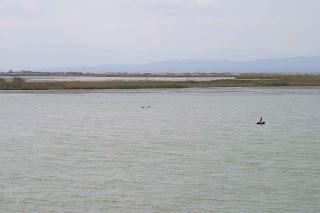 Parque Natural del Delta de l'Ebre.