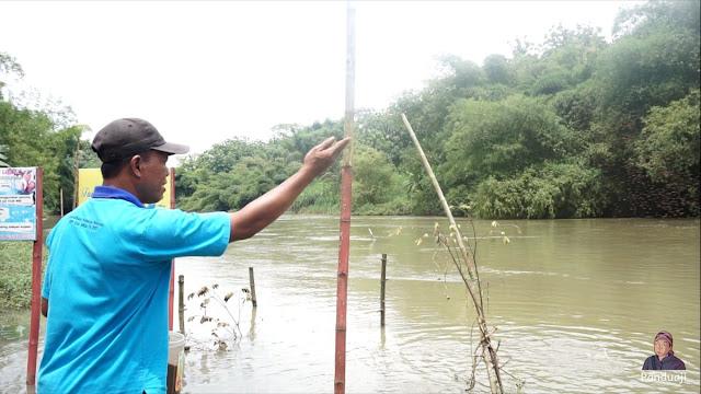 Pak Son memberi pakan ikan di Sungai