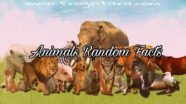 Animals Facts- Facts About Animals for Kids - Animals In Hindi- Random Facts