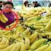 看到的這種香蕉,千萬別買,致癌率超高,有可能會危害健康,看完之後可不能再買錯了哦!