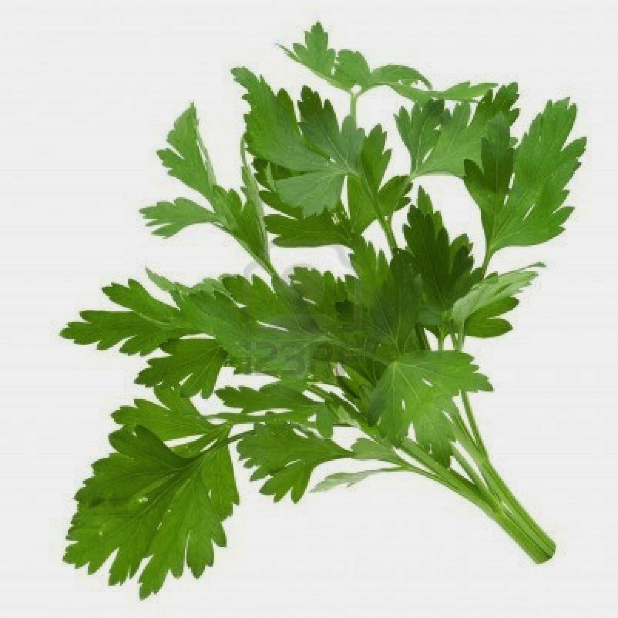 The Herb Hound: PARSLEY