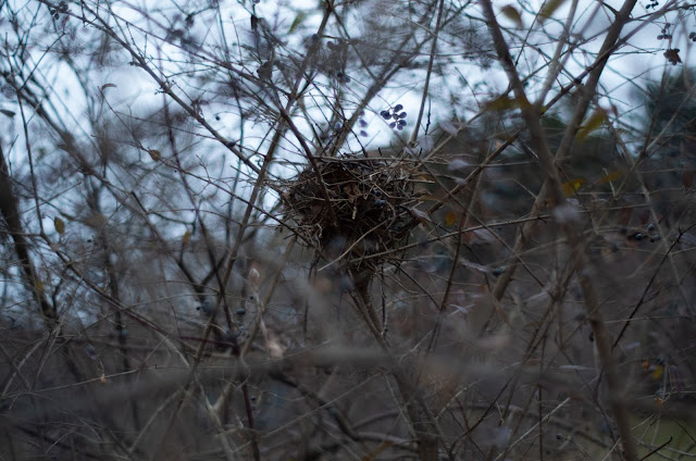 A bird's nest nestled in trees in front of an overcast sky.