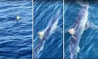 morski pas Makarska slike otok Brač Online