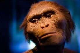 l'australopiteco lucy, riassunto sulla sua scoperta