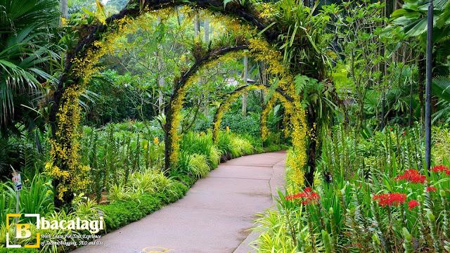 Singapore Botanic Gardens, Tempat Wisata di Singapura : tempatwisata.biz.id