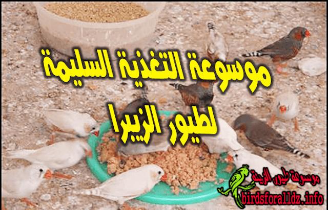 موسوعة غذاء طيور الزيبرا