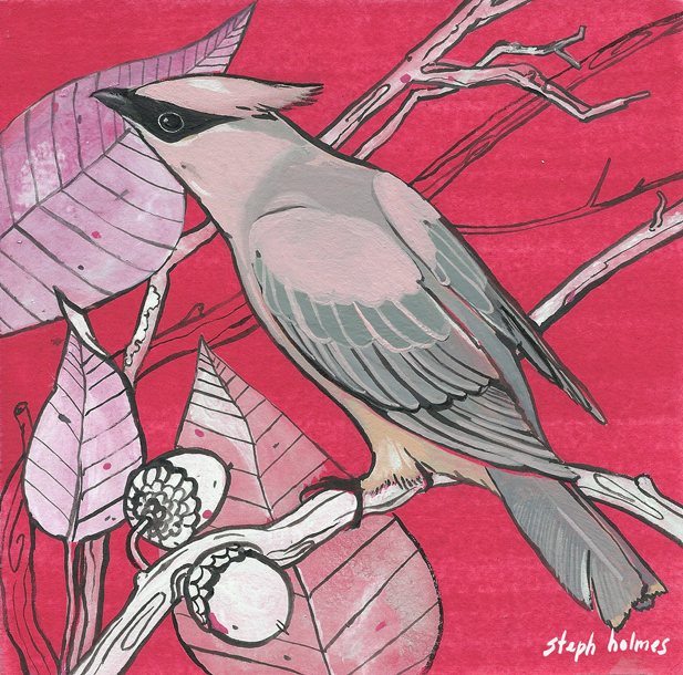 Cedar Waxwing bird painting