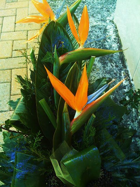 A estrelícia ou ave do paraíso, de nome científico Strelitzia reginae, é uma planta cuja as flores chamam atenção por se parecerem com a cabeça do pássaro também denominado ave-do-paraíso.