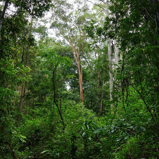 Regenwald Wald Kondilla Falls