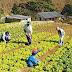 Gobierno destinará este año más de Bs 86 MM para pequeños productores