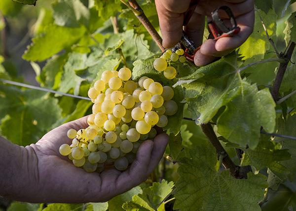 cava-excelencia-calidad-improvisa-vinos