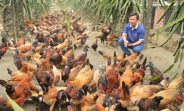 Thức ăn dinh dưỡng cho vật nuôi