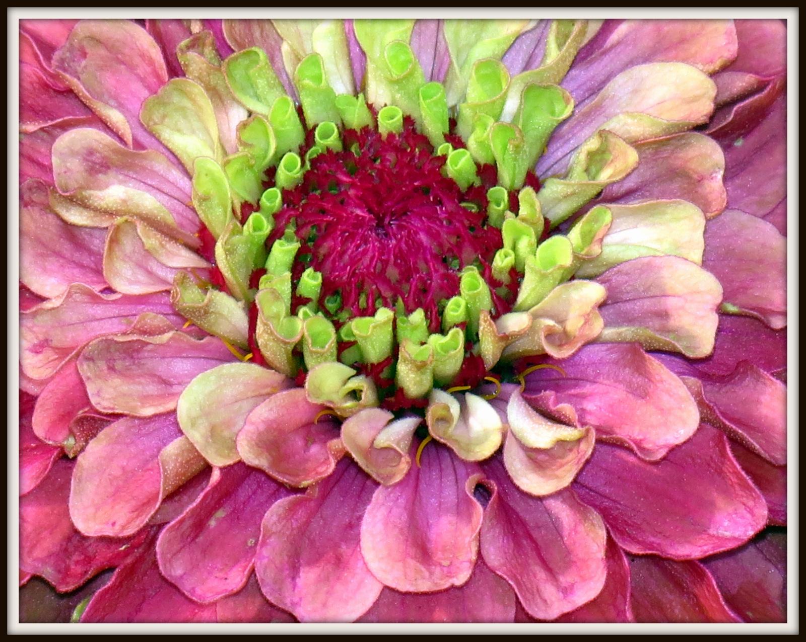 """Art by Judith Farnworth: Flower """"Step by Step"""" Loose ...  Easy Big Flower Paintings"""