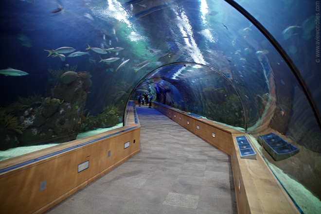 Tunnel of Fish