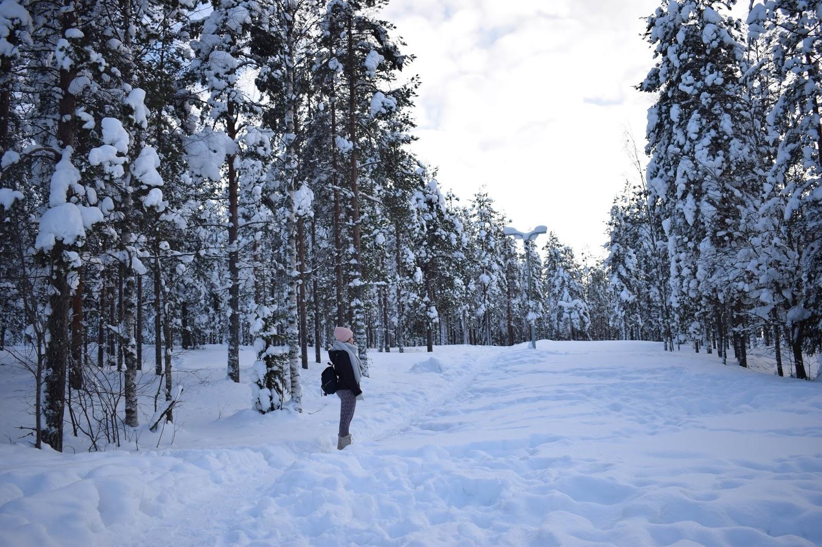 nature laponie neige