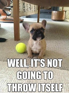 Dog Fun : Well it's not going to throw itself?