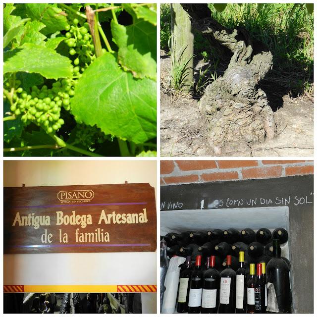 Visita a vinicola Pisano - Montevideo, Uruguai
