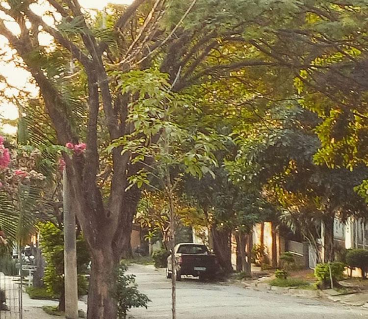 As ruas, cheias de curvas, árvores e plantas por todo o lado.