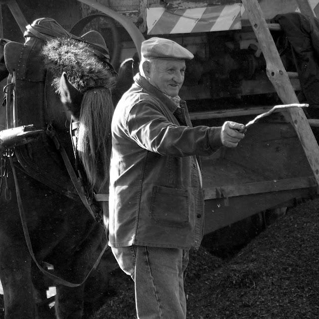 Fête de la galette à pipriac le cheval de trait