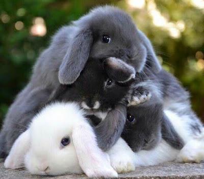 Adopt a Rabbit