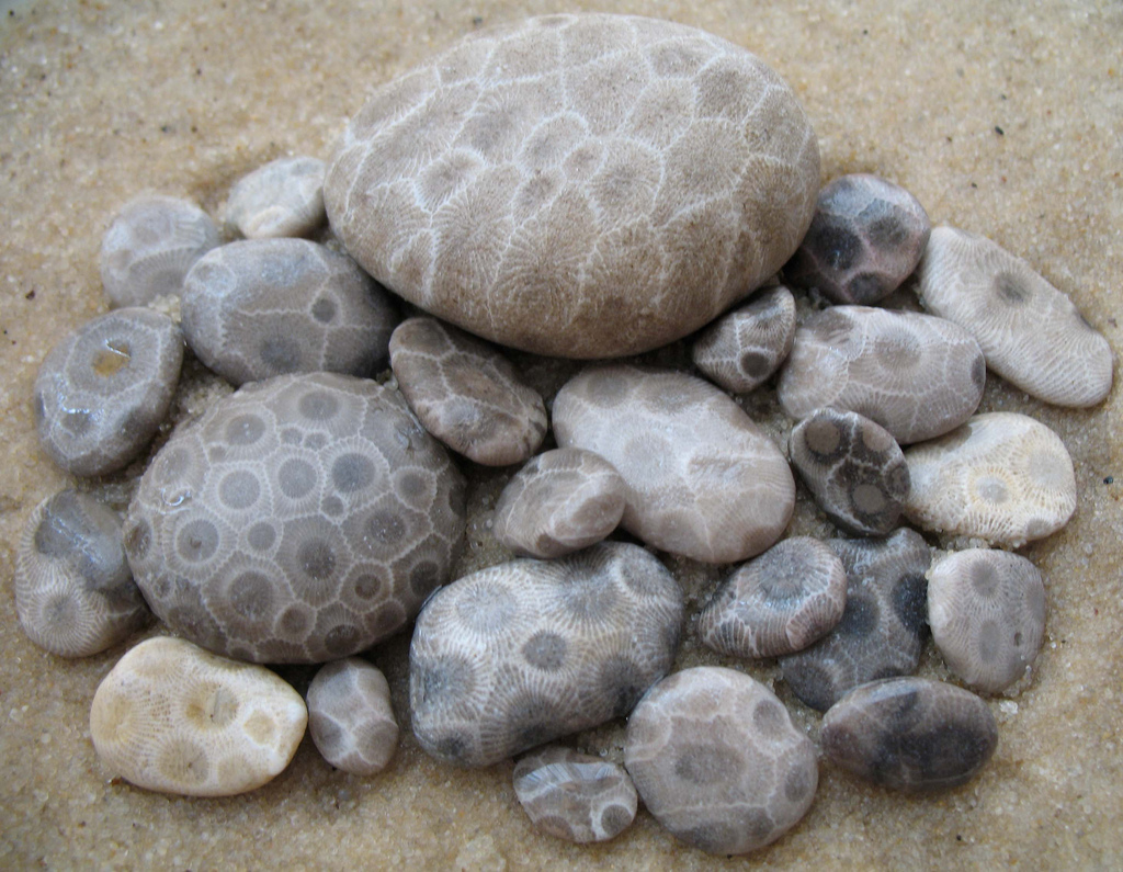 charlevoix chamber times petoskey stone lore. Black Bedroom Furniture Sets. Home Design Ideas