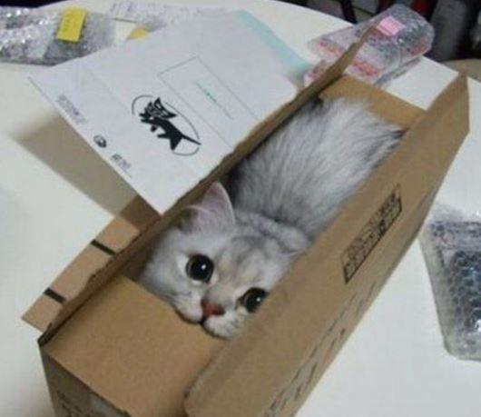 carton et chat 33