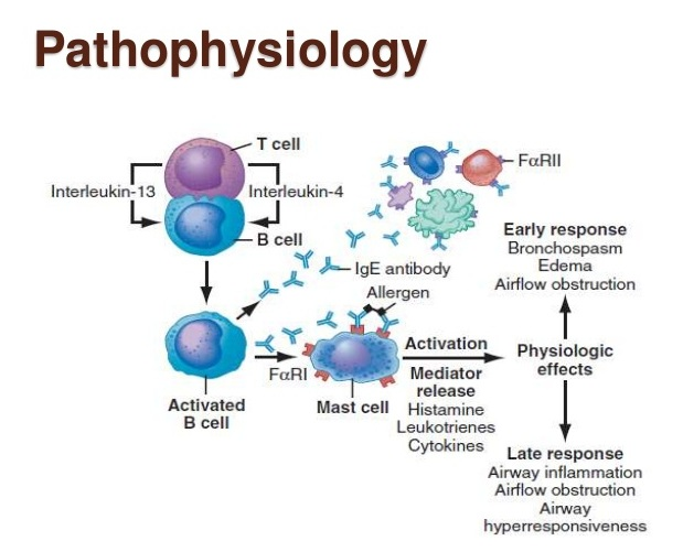 88290212 acute asthma 2 Acute systemic anaphylaxis anaphylaxis is a systemic allergic reaction involving the respiratory and/or the cardiovascular 88290212 acute asthma 2 research paper.