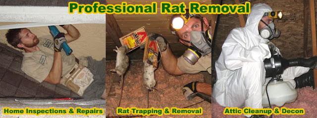 Rat Prevention