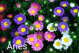 Karektor Zodiak Dan Bunga